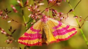 Vlinders (Nacht & Dagactieve)