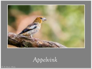 Appelvink-1