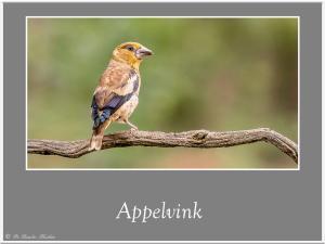 Appelvink-2