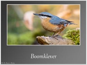 Boomklever 1
