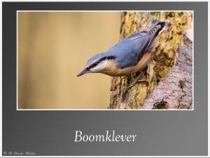 Boomklever-2