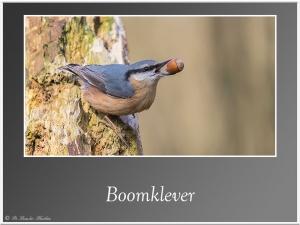 Boomklever-4
