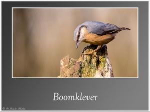 Boomklever-5