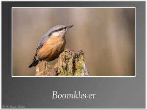 Boomklever-6