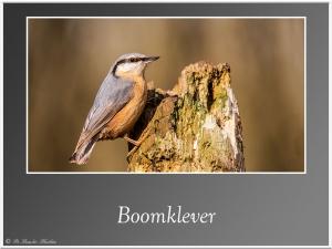 Boomklever-7