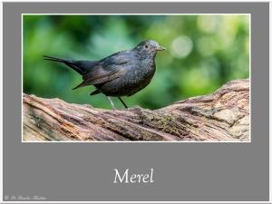 Merel-1