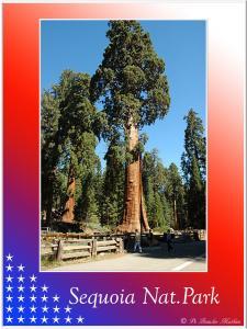 (10)-Sequoia