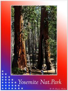 (15)-Yosemite