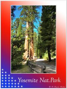 (16)-Yosemite