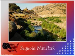 (3)-Sequoia