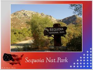 (4)-Sequoia