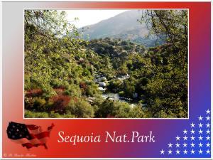 (5)-Sequoia