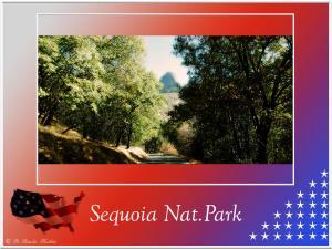 (6)-Sequoia