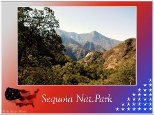 (7)-Sequoia