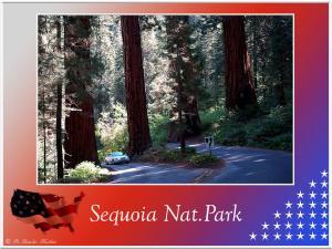 (8)-Sequoia