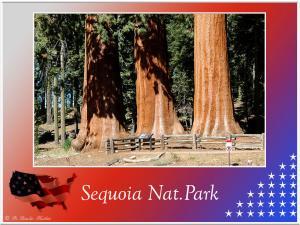(9)-Sequoia