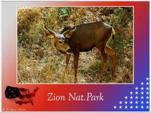 (96)-Zion