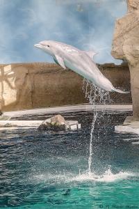 Dolfijn-7822