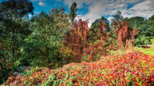 Herfstkleuren-4671