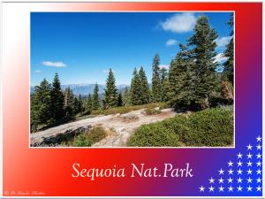 Sequoia-Nat-Park-157 (2)
