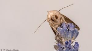 Vlinder-8464